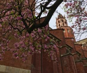 Vercelli: tour in 7 tappe nel centro storico della città del riso