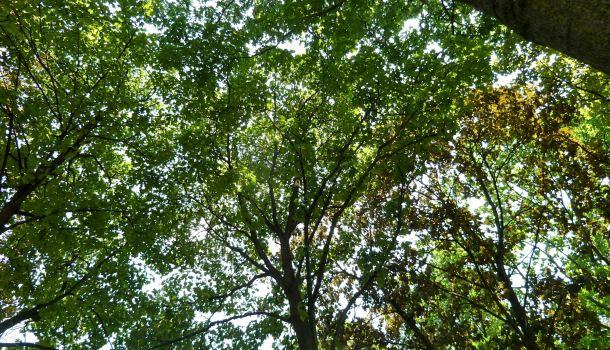 alberi montmartre