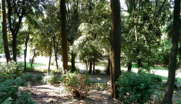 Alberi nel Parco di Villa Strozzi