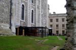 Case dei corvi alla Torre Bianca