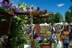 piante e fiori a Masino