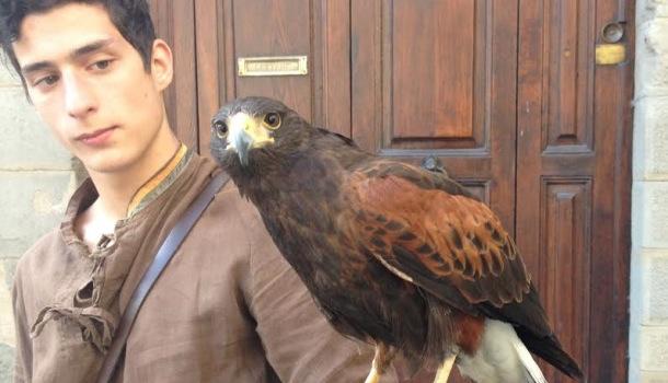 falconiere cortona