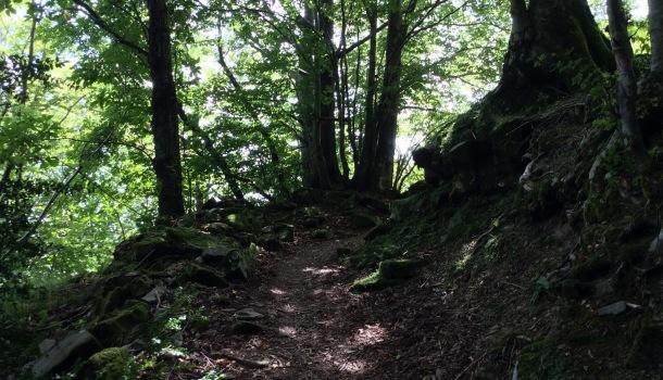 sentiero per albero con gli occhi