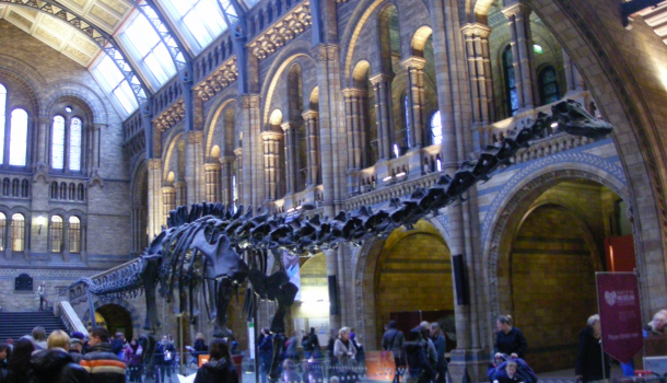 natural history museum ingresso