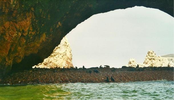 islas ballestas e leoni di mare