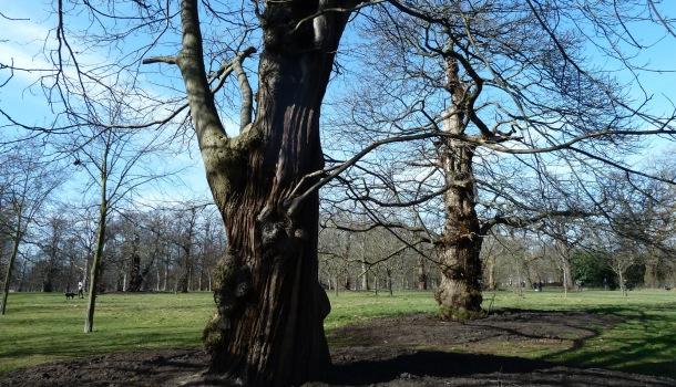 alberi a kensington gardens