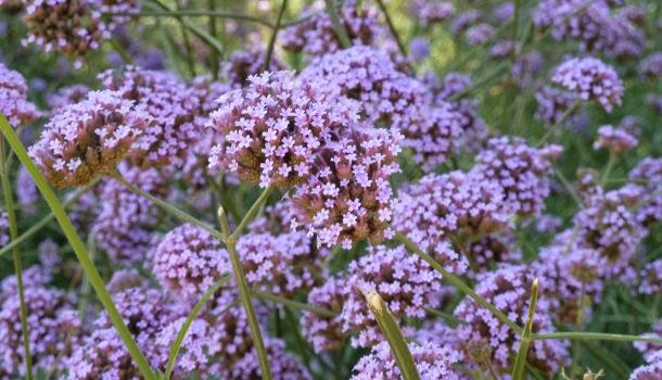 fiori a park guell