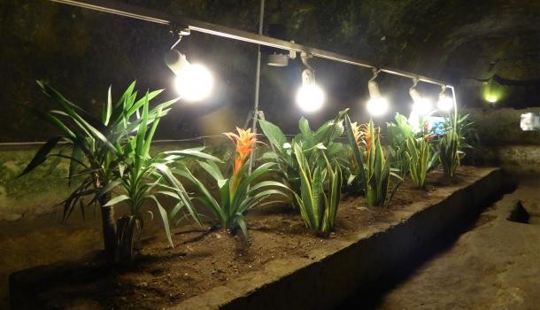 piante coltivate in napoli sotterranea_Alessandra Malatesta