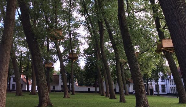 case sugli alberi begijnhof brugge