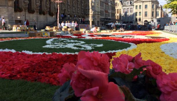 manifestazione fiori a lovanio
