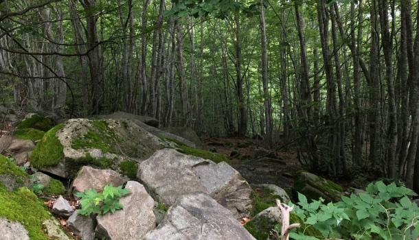 bosco del lago santo
