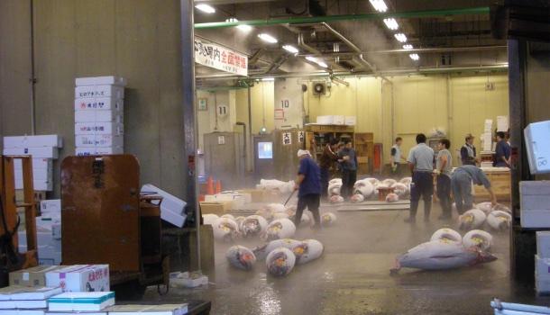 pulitura tonni tsukiji fish market