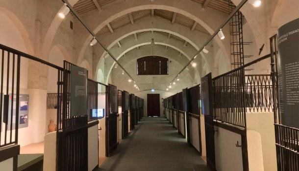 sala museo navi antiche di pisa